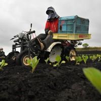 キャベツ農家の畑で農機具を使って苗の定植作業をする望月由香利さん=群馬県嬬恋村で2020年5月24日、手塚耕一郎撮影