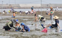 People are seen gathering clams at a beach in Tatsuno, Hyogo Prefecture, in western Japan, on June 6, 2020. (Mainichi/Yoshiyuki Hirakawa)