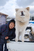 Akita dog Wasao, who was appointed as a special ambassador by the National Federation of UNESCO Associations in Japan, is seen in the town of Ajigasawa, Aomori Prefecture, on Jan. 23, 2011. (Mainichi/Hidenori Yazawa)