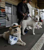 Akita dog Wasao, who was appointed as a