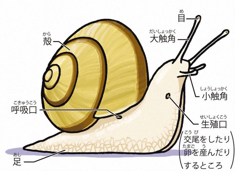 殻 時 から た カタツムリ 生まれ