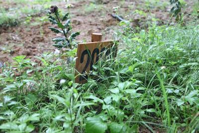 仮埋葬地の墓標に記された2000番台の数字は身元不明者を表す符号。季節は巡り、生い茂る雑草に姿を隠そうとしている=宮城県石巻市で2011年6月11日午前11時19分、梅村直承撮影