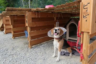 仮設住宅の敷地内に設置されたペット専用ブース=福島県新地町で2011年6月20日、佐々木順一撮影