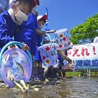 アユの稚魚を放流する子どもたち=福島県富岡町の富岡川で