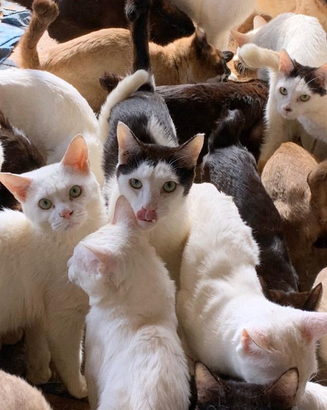 の 飼い 猫 多頭