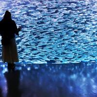 まるできらめく星の中に人が立っているように見える「イワシの銀河水槽」=北海道登別市の「登別マリンパークニクス」で2020年6月16日、貝塚太一撮影
