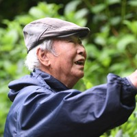 アジサイの枝切りを行う南澤さん。切るべき枝を瞬時に見分ける。「来年咲く花だけでなく、その次の年のことまで考えて切ることが大切なんだ」と手早くはさみを動かしていた=東京都あきる野市で2020年5月21日、滝川大貴撮影