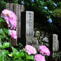 南澤さんの親族が眠る墓。アジサイが周囲を彩る=東京都あきる野市で2020年6月22日、滝川大貴撮影