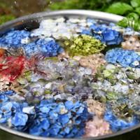 南澤さんの家の庭で水を張ったたらいに飾られていた、育てた色とりどりのアジサイ=東京都あきる野市で2020年6月22日、滝川大貴撮影