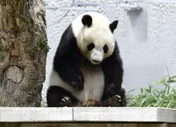 神戸市立王子動物園の「タンタン」=神戸市灘区で2020年6月1日午前10時8分、北村隆夫撮影