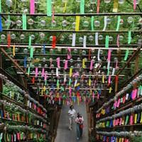 かえる寺として親しまれている如意輪寺=福岡県小郡市で2020年6月29日、田鍋公也撮影