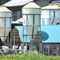 福島産の肉牛から放射性セシウムが検出された問題で、畜産農家の調査をする県の職員ら=福島県南相馬市で2011年7月10日午前11時32分、小林努撮影