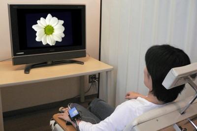 花の画像を見せて行った実験の様子=農研機構提供