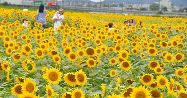 小野 市 ひまわり 公園