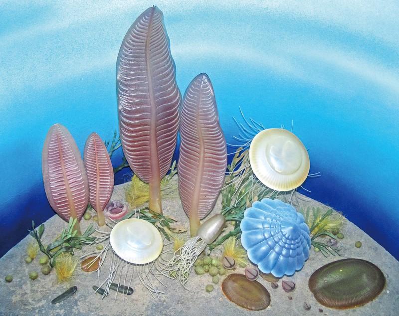 エディアカラ生物群の想像図 James St. John