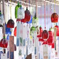 出荷の最盛期を迎えた「河内風鈴」=大阪府交野市で、藤井達也撮影
