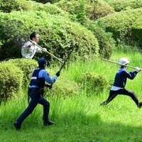 舞鶴公園を逃げ回るイノシシを追う警察官ら=福岡市中央区で2020年8月5日午前9時49分、須賀川理撮影