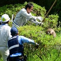 舞鶴公園を逃げ回るイノシシ=福岡市中央区で2020年8月5日午前9時49分、須賀川理撮影