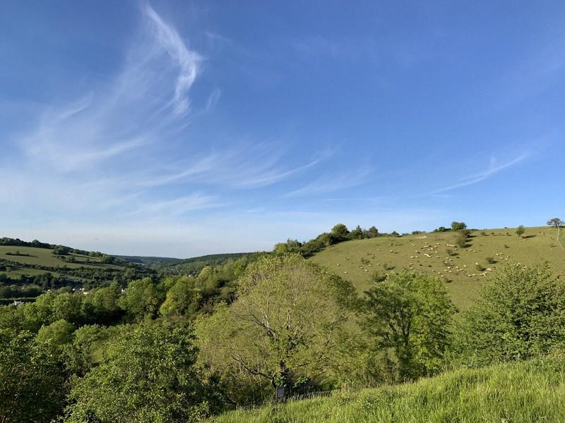 樹木や草が多い場所を散策した後は、マダニがついていないかチェックしよう=筆者撮影