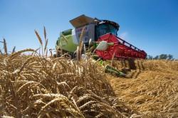 ロシアは世界最大の小麦輸出国 (Bloomberg)