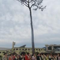 岩手県陸前高田市の「奇跡の一本松」=日本コカリナ協会提供