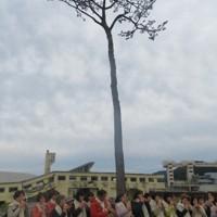 岩手県陸前高田市の「奇跡の一本松」