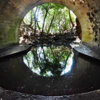 上空から発見されにくいように、高さ最大約3.5メートルのトンネルで大砲を守っていた津和瀬砲台。75年前は目の前に広がったはずの海が、生い茂る木々で見えなくなっていた=福岡県宗像市で2020年8月16日、森園道子撮影