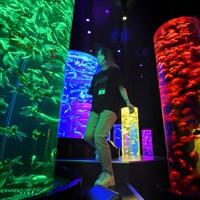 約3万匹の金魚を展示する常設施設として開業するアートアクアリウム美術館=東京都中央区で2020年8月27日、丸山博撮影