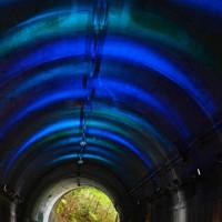 涼しげにライトアップされた神戸市立森林植物園内のトンネル=神戸市北区で2020年8月27日、猪飼健史撮影