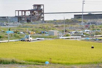 周りにはがれきが残るなか、震災の影響を感じさせないくらいに育った稲穂が夕日に輝いていた=岩手県陸前高田市で2011年9月16日午後5時1分、三浦博之撮影