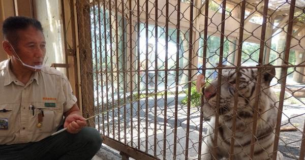 東武動物公園に毎月鶏肉330キロ、ホワイトタイガーなどの餌に 山形の業者が寄付