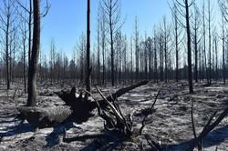 2017年10月の山火事で焼き尽くされた国立森林公園=ポルトガル中部レイリアで2017年11月、八田浩輔撮影