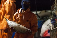 In this March 23, 2016 file photo, a foreign worker unloads fish from a U.S. fishing vessel at Pier 38 in Honolulu. On Sept. 18, 2020. (AP Photo/Caleb Jones)