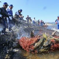 震災後初めて再開された漁で水揚げされるたくさんのサケ=福島県楢葉町の木戸川で2015年10月18日、山本晋撮影
