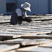 シラスの天日干し作業を進める女性=兵庫県淡路市で、藤井達也撮影