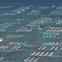 色とりどりのノリ網が張られた有明海=佐賀市沖で2020年10月18日午前9時18分、本社ヘリから矢頭智剛撮影