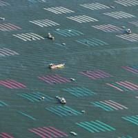 色とりどりのノリ網が張られた有明海=佐賀市沖で2020年10月18日午前9時22分、本社ヘリから矢頭智剛撮影