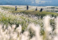 Visitors are seen in a field of Japanese silver grass sparkling under the sun in the southwestern Japan city of Aso, Kumamoto Prefecture, on Oct. 14, 2020. (Mainichi/Osamu Sukagawa)