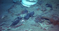 This 2004 image provided by the University of Rhode Island's Institute for Exploration and Center for Archaeological Oceanography and the National Oceanic and Atmospheric Administration's Office of Ocean Exploration shows the shoes of one of the possible victims of the Titanic disaster. (Institute for Exploration and Center for Archaeological Oceanography/University of Rhode Island/NOAA Office of Ocean Exploration via AP)