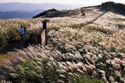 夕日を浴びて光るススキ=和歌山県の生石高原で、平川義之撮影
