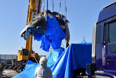 クレーンで陸に引き上げられ、トレーラーに載せられるクジラの死骸=北九州市若松区響町1で2020年10月20日午後0時2分、成松秋穂撮影
