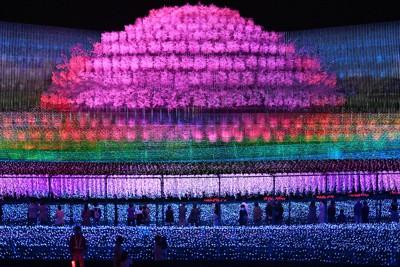 色鮮やかな光の演出で魅了する「なばなの里」のイルミネーション=三重県桑名市長島町で2020年10月23日、兵藤公治撮影