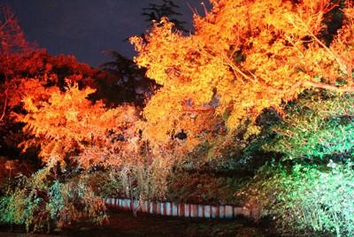 ライトアップされた和室庭園=静岡県沼津市御幸町の沼津市民文化センターで2020年10月23日午後5時47分、石川宏撮影