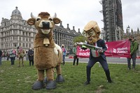 A demonstrator dressed as Donald Trump holding a syringe pretends to inject a pantomime cow during the Stop Trump Coalition protest in Parliament Square, London, Saturday, Oct. 24, 2020 ahead of the US Presidential election on Nov. 3. (Jonathan Brady/PA via AP)