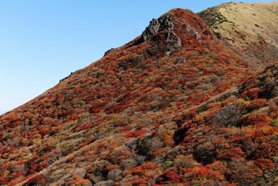 星生山の西側斜面を染めた紅葉=大分県のくじゅう連山で2020年10月25日、須賀川理撮影