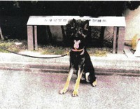 This photo provided by Hyogo Prefectural Police shows the police dog that went missing and was later found safe.