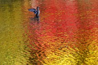 A duck spreads its wings in a pond as fall foliage colors are reflected on the water, on Oct. 27, 2020, in Nagano, central Japan. (AP Photo/Kiichiro Sato)