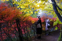 People wearing face masks to help curb the spread of the coronavirus take pictures while walking along a path as the trees begin to change, on Oct. 26, 2020, in Nagano, northwest of Tokyo, Japan. (AP Photo/Kiichiro Sato)