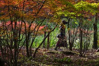 A woman wearing a face mask to help curb the spread of the coronavirus walks along a path as the trees begin to change fall foliage colors, on Oct. 27, 2020, in Nagano, northwest of Tokyo, Japan. (AP Photo/Kiichiro Sato)