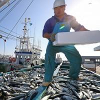 津波で一時避難していた漁船からサバを水揚げする漁師たち。午前7時から水揚げの予定だったが、津波警報を受け、沖に避難していた。「震災の津波では沖で魚を捨てた船もあったと聞いた。水揚げできてよかった」と話した=福島県いわき市の小名浜港で2016年11月22日午後0時56分、小川昌宏撮影